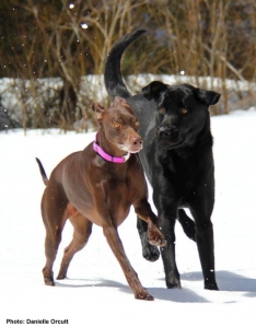 Put a leash on it! Remember, as the warmer weather comes around, so do dogs running-at-large which is against the Town of Saguache ordinance and owners can be ticketed. Photo: Danielle Orcutt