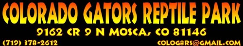 gator-header-1240x240