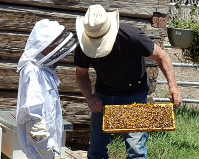 Bees_Everson Ranch_Saguache Today