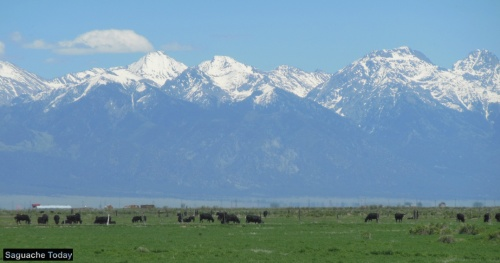 SanLuisValley_Cattlemen